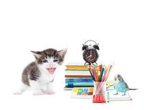 Parrot ,cat and school stationery Royalty Free Stock Photography