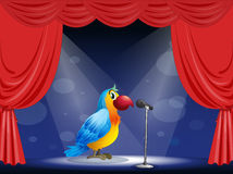 A parrot at the center of the stage Royalty Free Stock Images