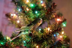 Parrot and Christmas tree Stock Photo