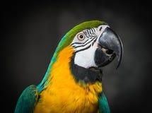 Parrot close-up stock photos