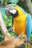 Parrot closeup Stock Photo