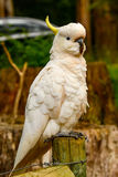 Parrot cockatoo. Stock Photos