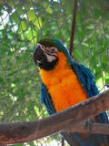 Parrot Cockatoo Stock Photos