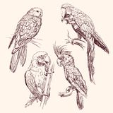 Parrot  collection   vector llustration Royalty Free Stock Images
