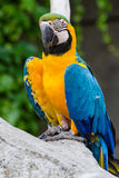 Parrot. Colored parrot on tree trunk Royalty Free Stock Photography