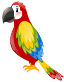 Parrot with colorful feather. Illustration Stock Photos