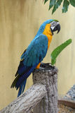 Parrot. Colorful parrot quietly stand on the tree Royalty Free Stock Photo