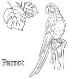 Parrot coloring pages for children EPS 10 royalty free illustration
