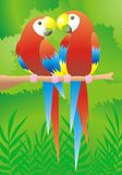 Parrot Couple. A colorful and romantic illustration of a parrot couple in rain-forest background vector illustration