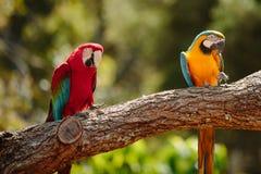 Parrot at Currumbin Wildlife Park Stock Photos