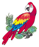 Parrot. Decorative illustration of parrot in white background Royalty Free Stock Photos