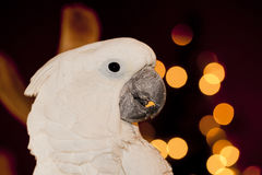 Parrot detail. Royalty Free Stock Photo
