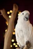 Parrot detail. Stock Photos
