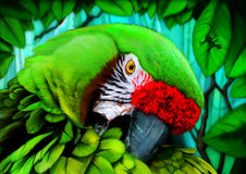 Parrot digital painting Royalty Free Stock Image