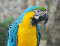 A parrot, Dominican republic Royalty Free Stock Photo