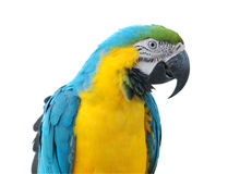 A parrot, Dominican Republic Stock Image