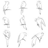 Parrot drawing set Royalty Free Stock Photography
