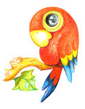 Parrot drawing. On a white background Stock Photos