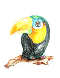 Parrot drawing. On a white background Royalty Free Stock Photo