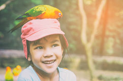 Parrot is eating food on girl head. Royalty Free Stock Image