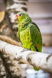 A parrot at zoo royalty free stock images