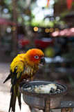 Parrot eating sunflower seeds Royalty Free Stock Image