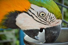 Parrot. Exotic bird in the Zoo Royalty Free Stock Images