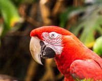 Parrot Exotic birds and animals in wildlife in natural setting.  stock photos