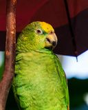 Parrot Exotic birds and animals in wildlife in natural setting.  stock photography