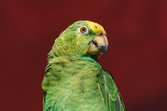 Parrot Exotic birds and animals in wildlife in natural setting.  royalty free stock photo
