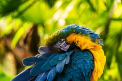 Parrot Exotic birds and animals in wildlife in natural setting.  stock photo