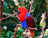 Parrot Exotic birds and animals in wildlife in natural setting.  royalty free stock image