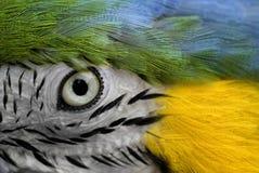 Parrot eye stock image