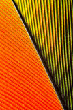 Parrot feather close-up. Macro shot of a feather from a green amazone parrot Stock Image