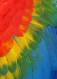 Parrot feathers. Background of bright colored feathers macaw parrot Royalty Free Stock Photography