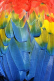Parrot feathers background. Background of colored feathers macaw parrot Stock Photography