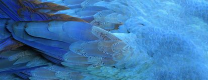 Parrot feathers blue exotic texture, royalty free stock image