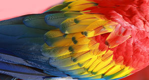 Parrot feathers exotic texture stock image