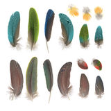 Parrot feathers royalty free stock photos