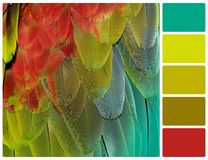 Parrot feathers with palette color swatches Royalty Free Stock Photography