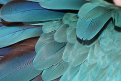 Parrot feathers. A picture close up of parrot feathers Stock Images