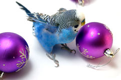 Parrot and fir tree new year's balls Stock Photo