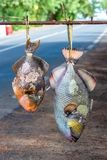 Parrot fishes sold on the road stock photography