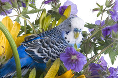 Parrot in  flower Stock Photography
