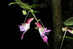 Parrot Flower Stock Image