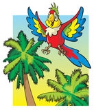 Parrot flying above the palm trees Stock Photos