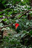 Parrot in forest royalty free stock photo