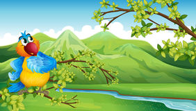 A parrot in front of the high mountains Stock Photography