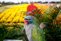 Parrot in Garden Royalty Free Stock Photos