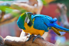 Parrot glance its back Royalty Free Stock Image